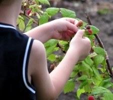 Pelastakaa Lapset ry valittaa nimensä käytöstä pikavippimarkkinoinnissa